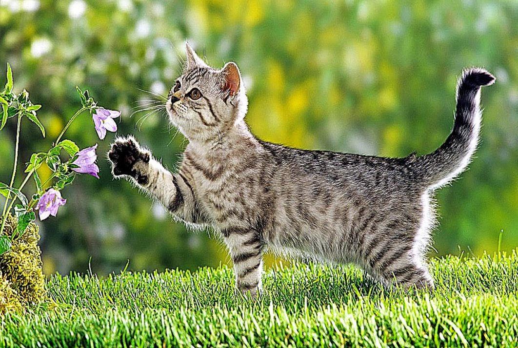 Katte sikkert hjem   min ven katten hobro