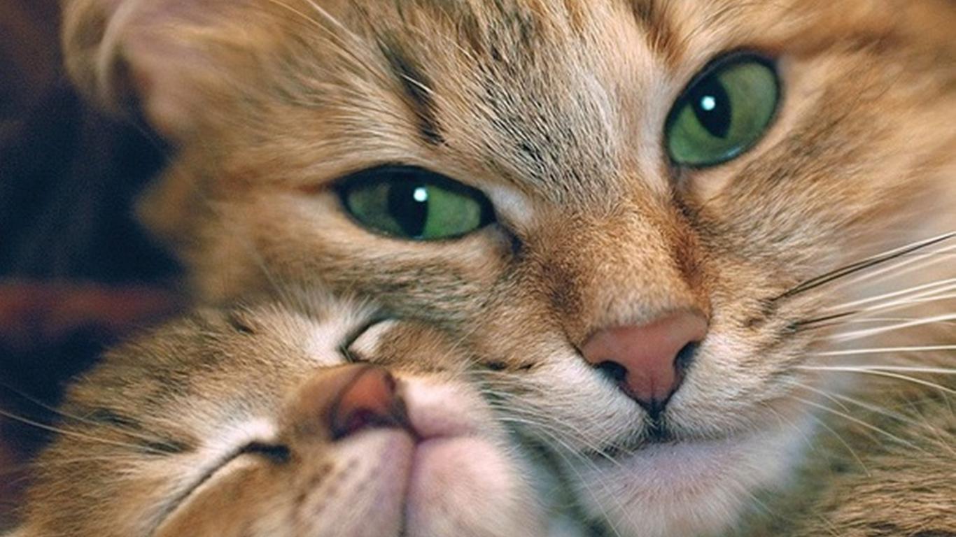 hvornår må katte komme ud