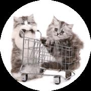 KATshop - køb udstyr på internatet og støt kattene