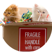 ca. 500 Katte i nye hjem hvert år - ″så godt som hjemme″