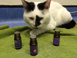 Zoopharmacognosy - sådan helbreder dyrene sig selv Aromaterapi med naturlige planter og olier. har en fantastisk effekt på bange katte