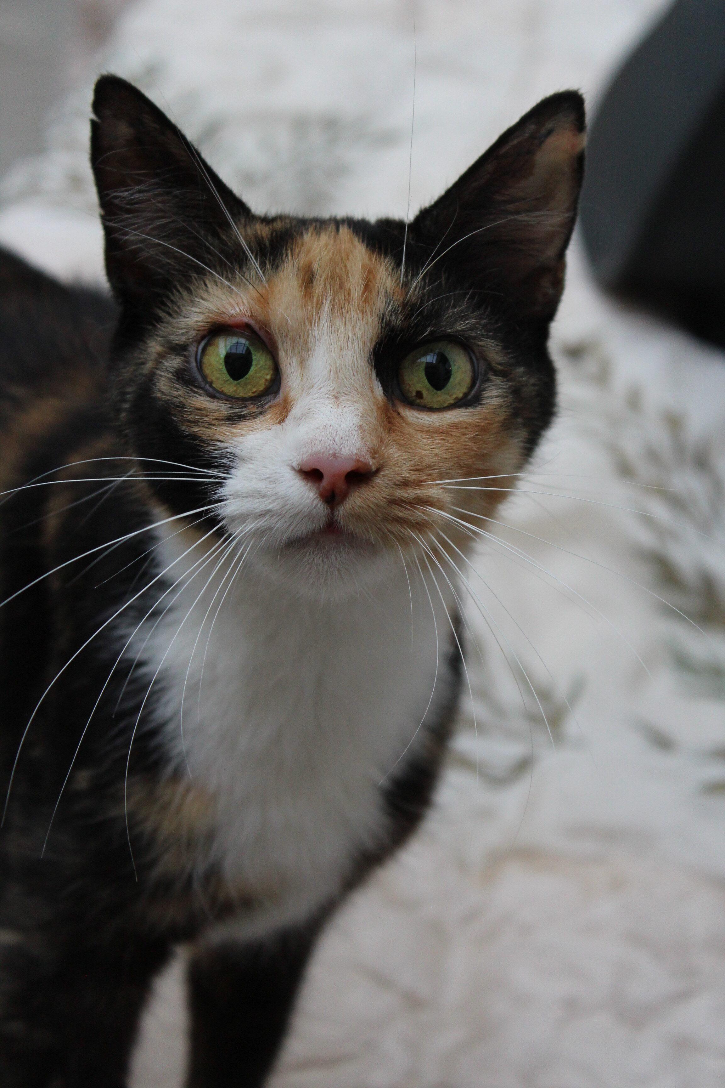 Bettemis er den sødeste og mest kælne hunkat på ca 1 år. hn er en super dejlig hunkat.