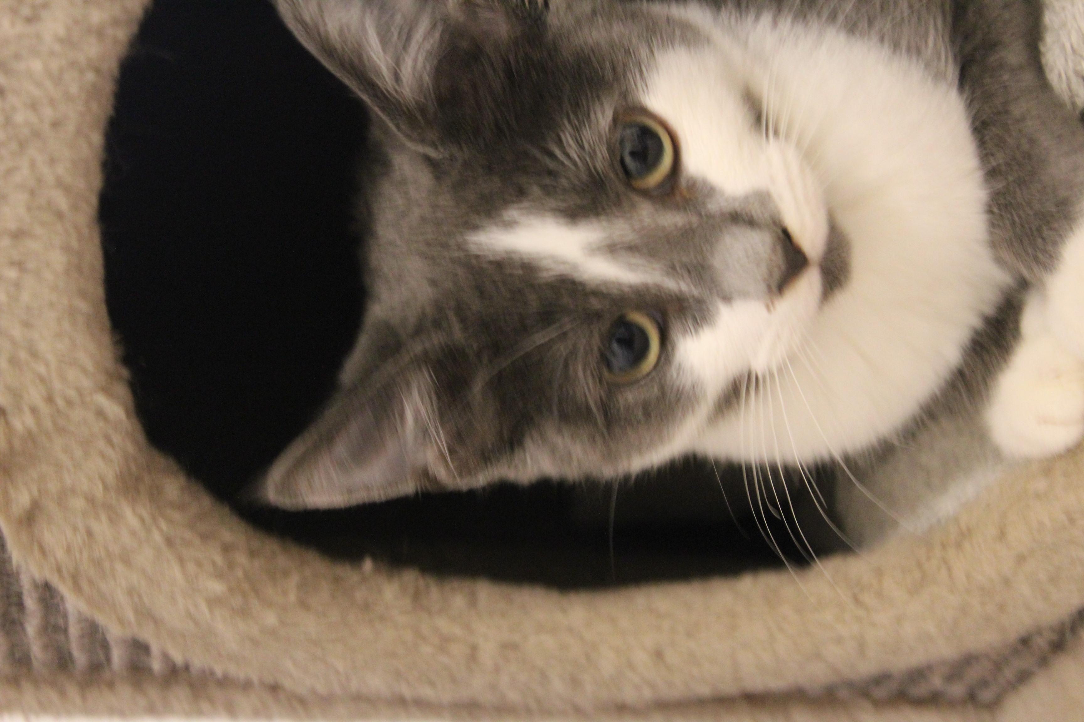 Pusle er en super lækker hunkillig på 14 uger - hun kan med hund og kat