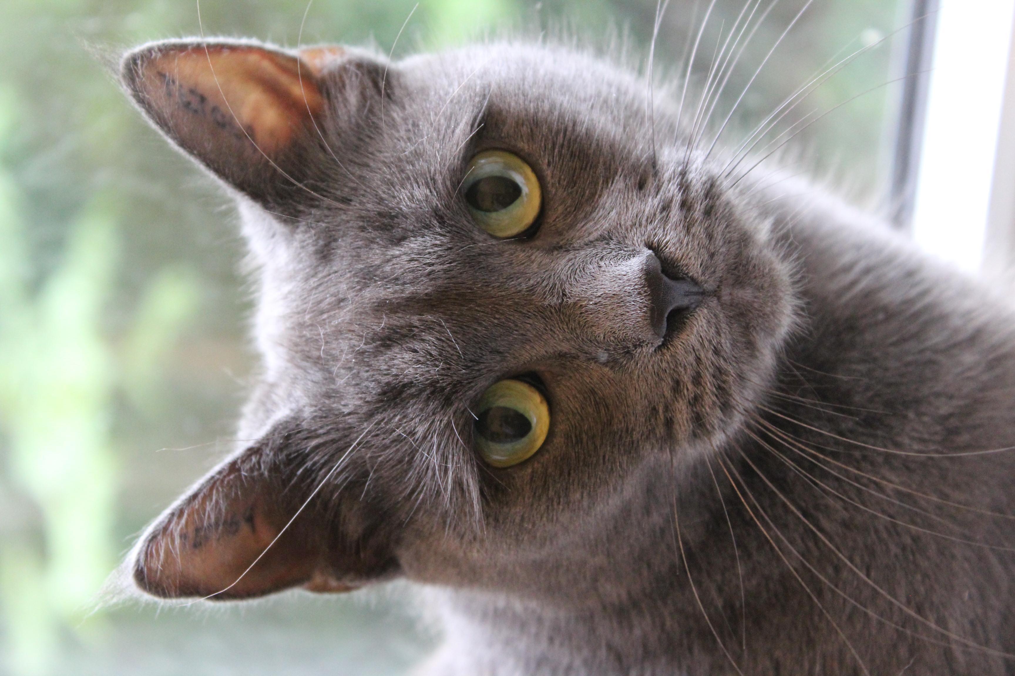 Gråmis er en 4 år gammel hunkat - vant til inde og udeliv - har boet sammen med Felix