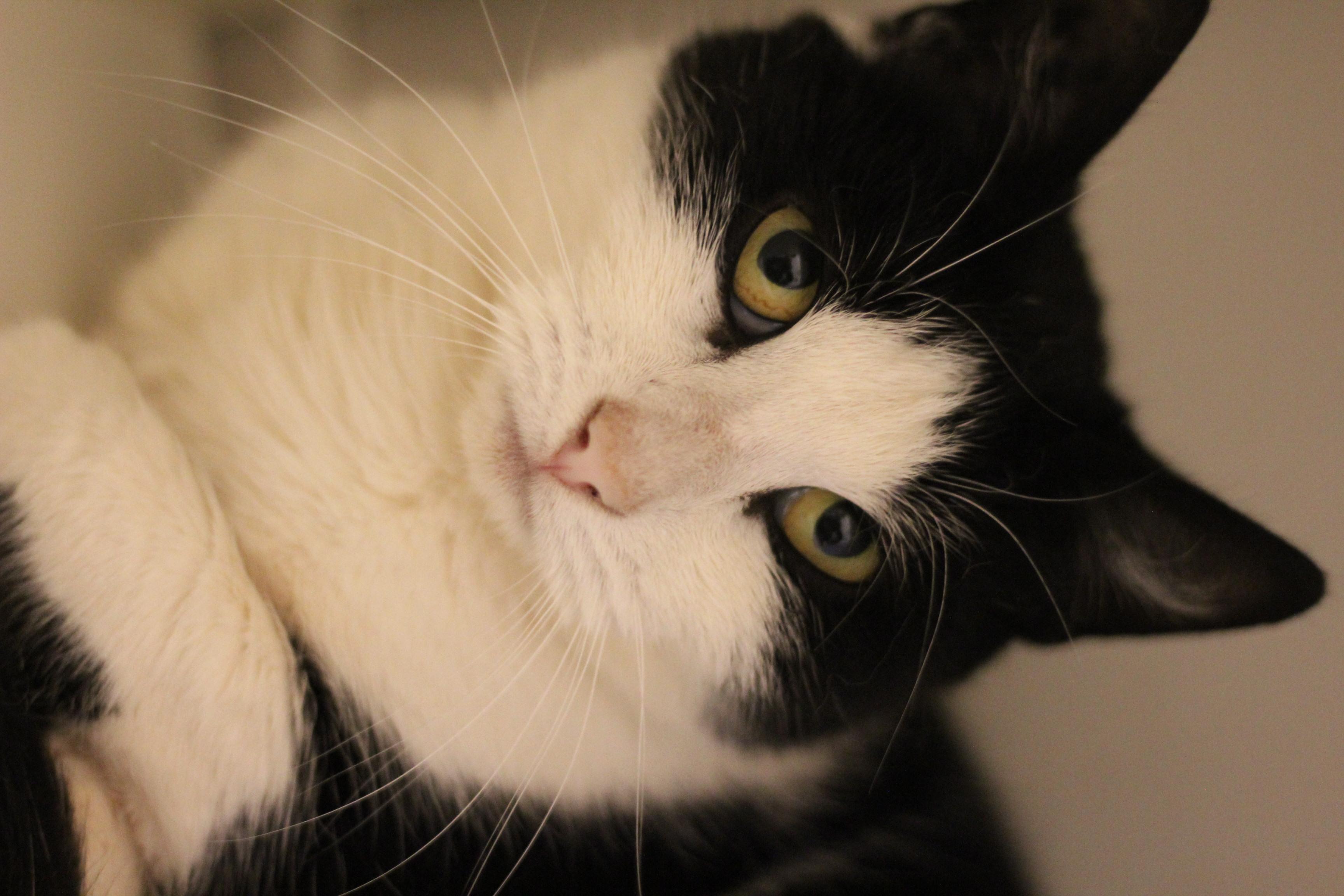 Blackie er en dejlig hunkat på 1 år. super sød og kælen.