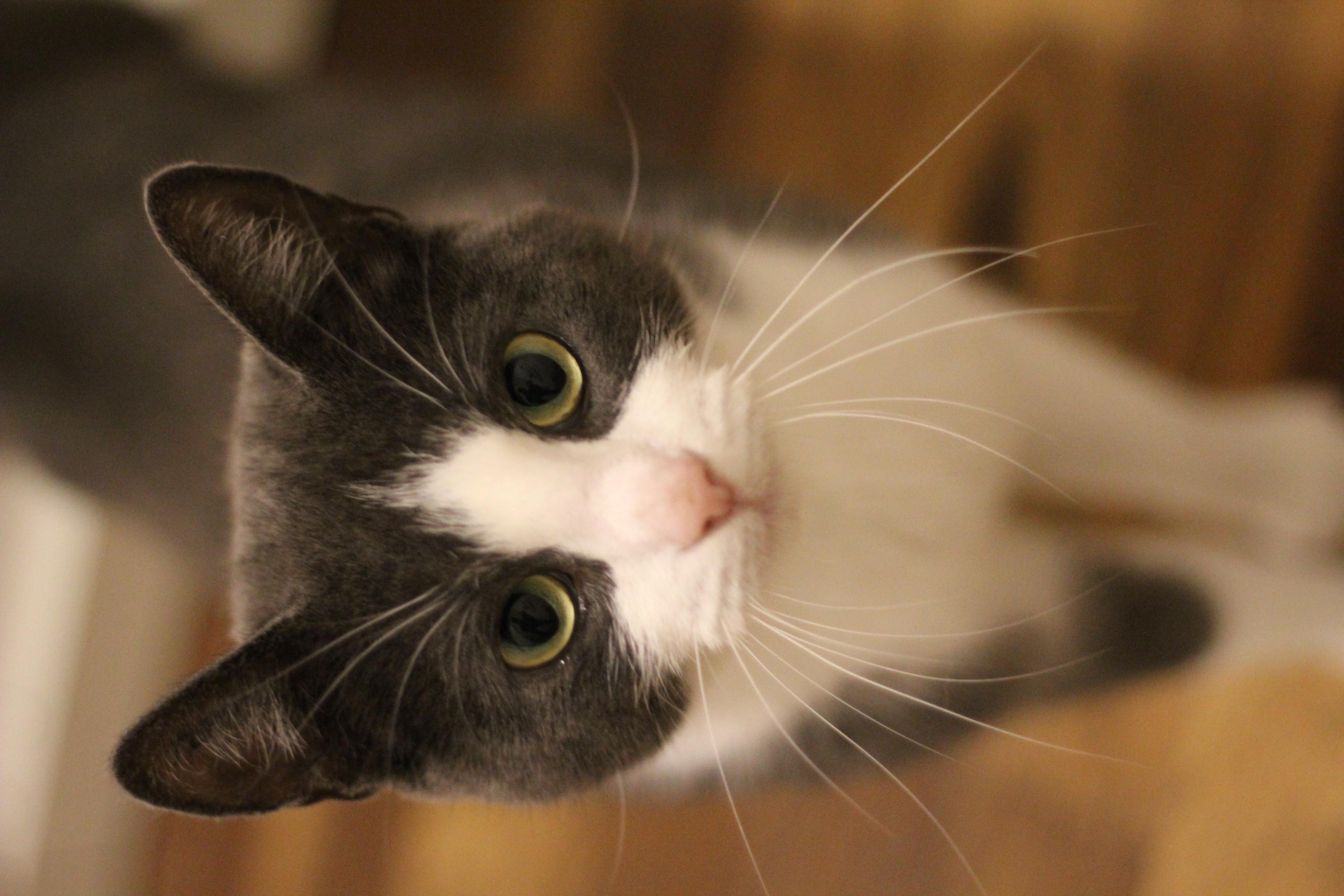 Mulle er en dejlig hunkat på 1 år. sød og kælen