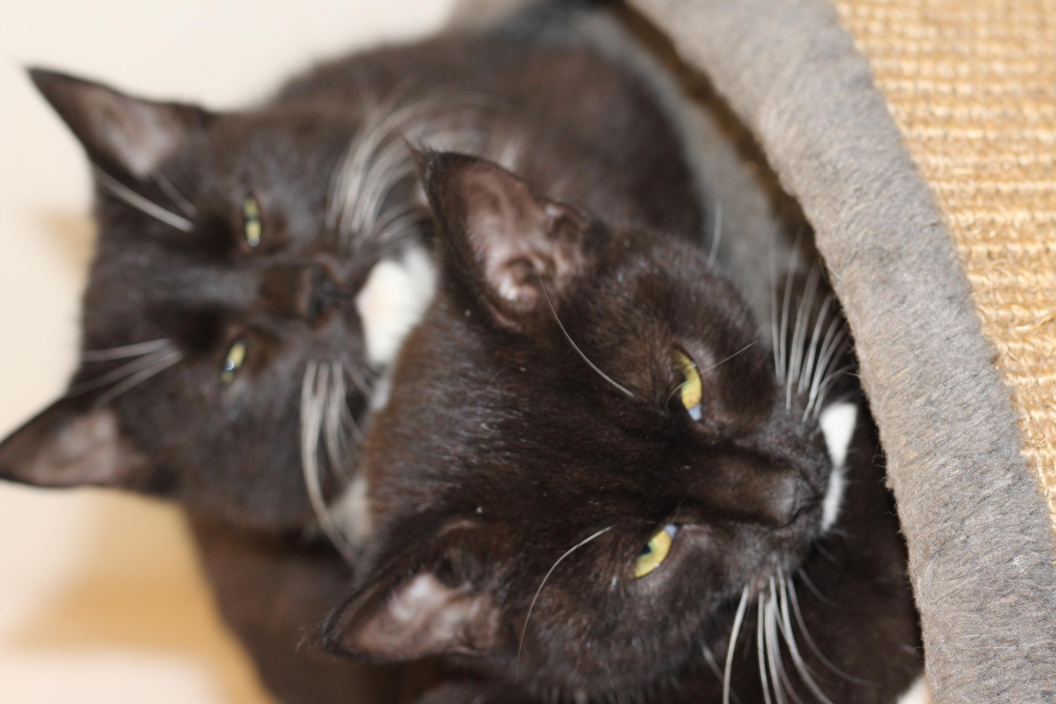 mikkel er en dejlig hankilling på 16 uger - har 2 søskende på samme alder.