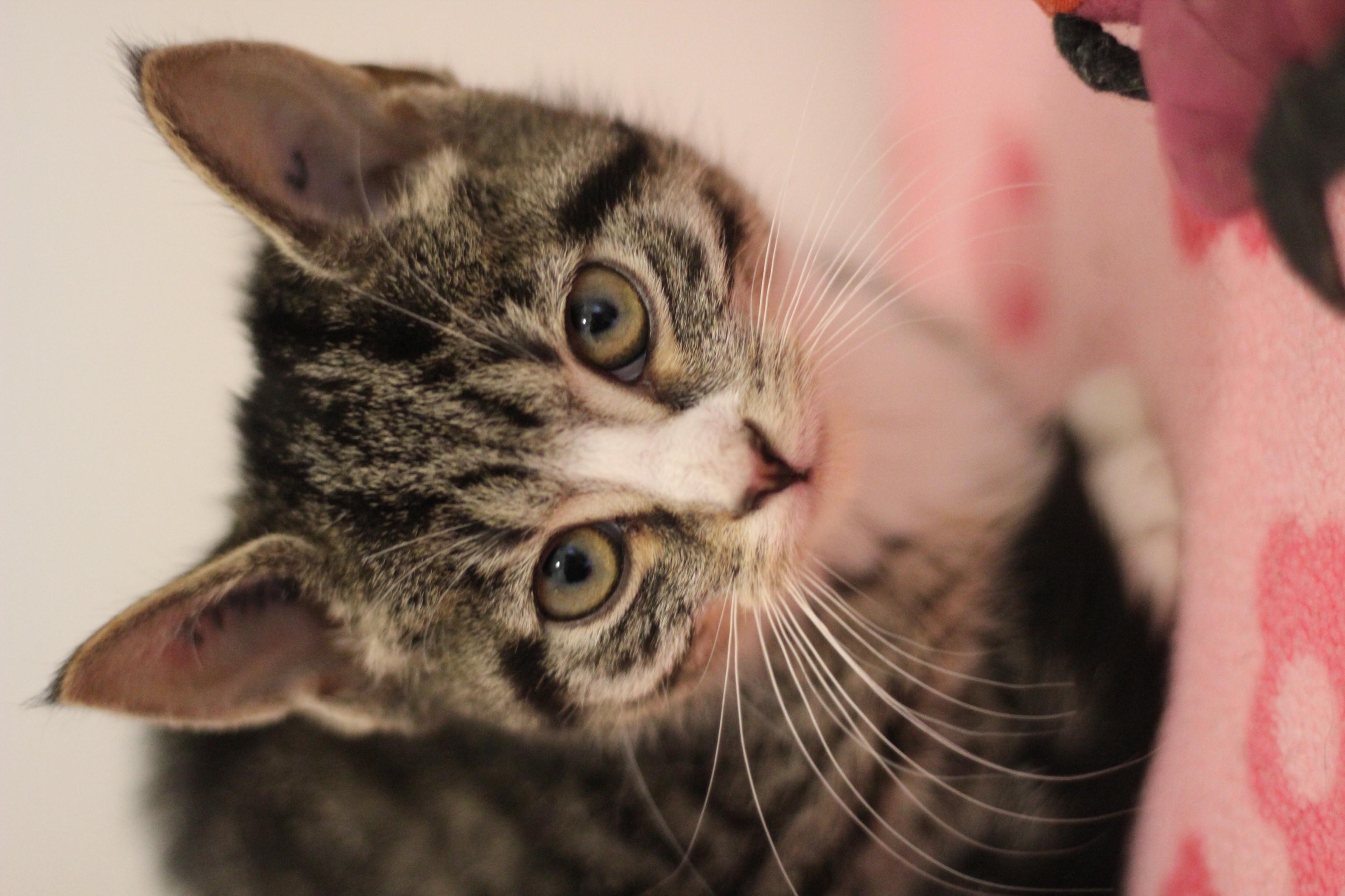 Dan er en lille bitte kat - men han er super sød og meget kælen.