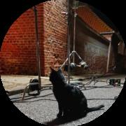 Katte med i film