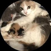 800 katte fik hjem i 2020