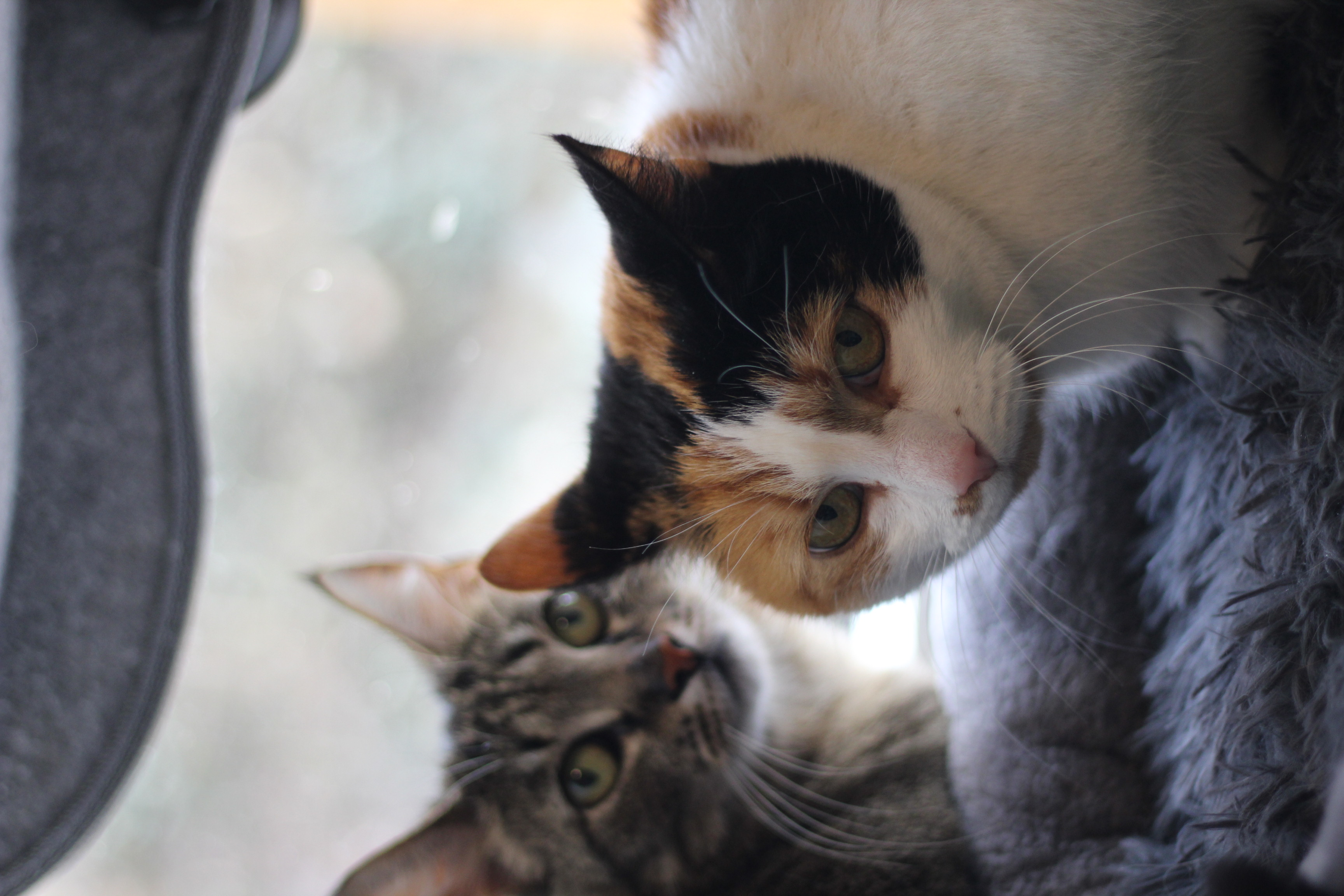 Lotte og pippi er to dejlige piger på 8 og 9 år. de skal følges ud i et almindeligt hjem som inde og udekatte sammen