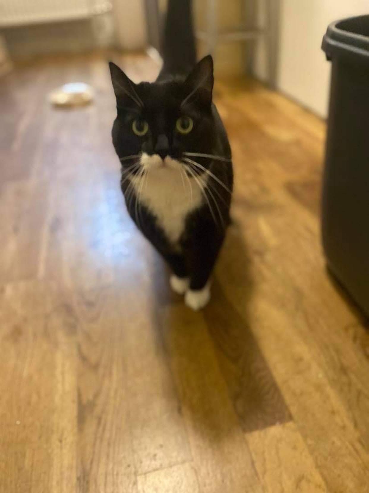 Bob er en dejlig og lidt tyk hunkat fra 2017 - hun vil gerne bo som alene kat -og helst et roligt hjem med evt et ægtepar eller en enlig