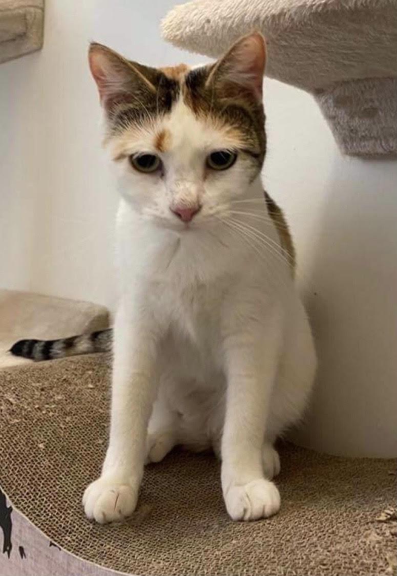Ida er den sødeste hunkat på 1½ år. hun er meget sød og kælen og kan med alle.