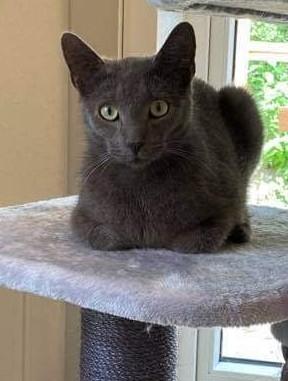 Mulan er den dejligste kat. fra maj 2020 Hun er sød og meget kælen og kan med andre katte, hun er til hus og have