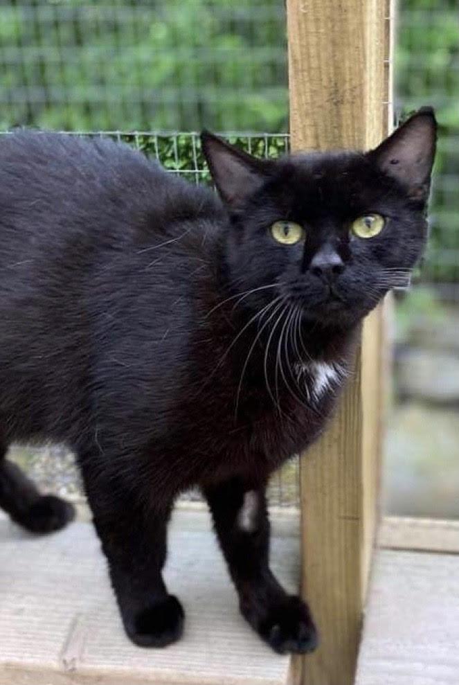 NEDSAT PRIS 600 kr. Selma er en super dejlig og meget kælen hunkat på 1½ år - hun er en fantastisk kat og kan passe ind i alle familier
